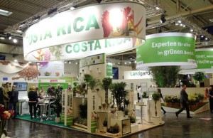 Tico flower producers seek buyers in Europe united states real estate PROCOMER plants flowers export Europe. costa rican producers costa rica costa developers
